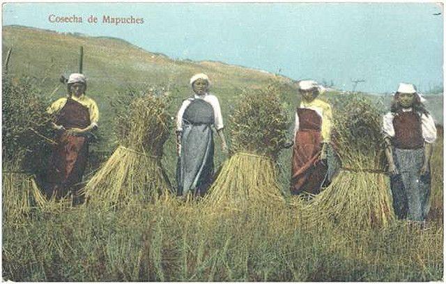 La población Mapuche-Wuilliche en Chile atribuye diabetes y hipertensión al abandono de su alimentación tradicional. Fuente: http://eatingchile.blogspot.com/2011/01/mapuche-wheat.html. Fotógrafo y fecha desconocidos.